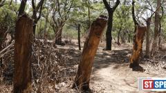 Include Salim Ali bird sanctuary in natural heritage site list: Citizens