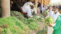 Vegetable prices soar in the city