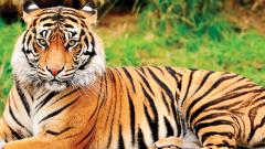 Steps being taken to reduce man-animal conflicts