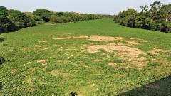 PMC turning a blind eye to Mula hyacinth