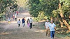 5 lakh saplings will be planted at Taljai Hill